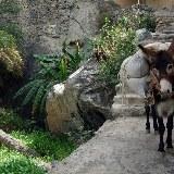 In den alten Bergdörfern ist das Transportmittel nach wie vor der treue Esel.