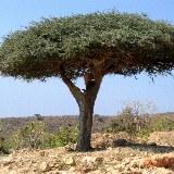 Die karge Landschaft wird nur von wenigen Bäumen durchzogen.