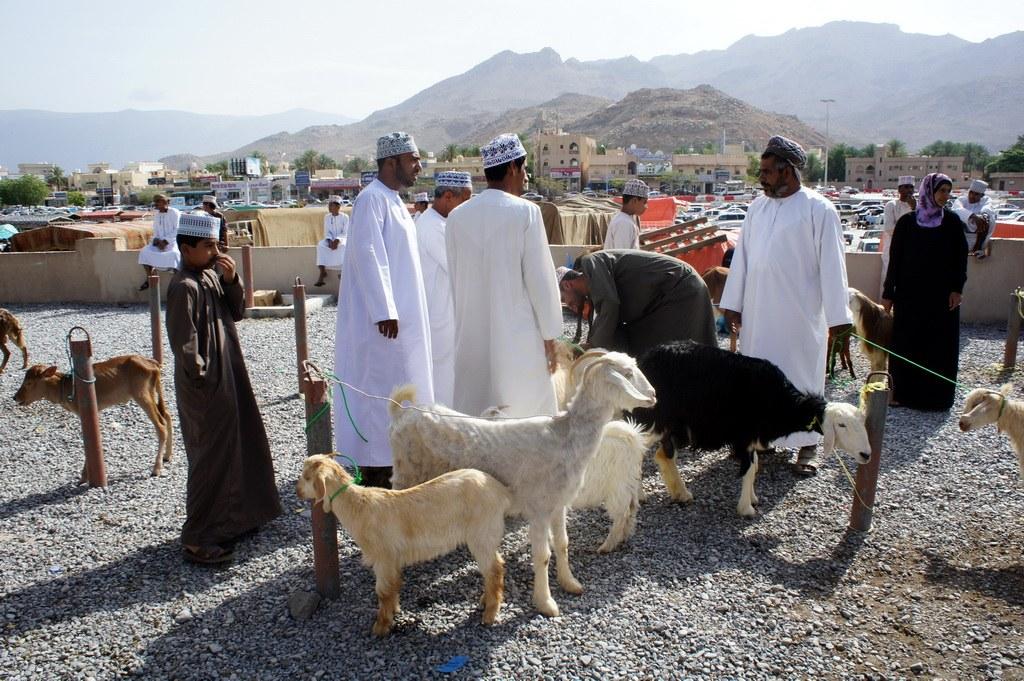 Während des Freitagsmarkts werden neben Ziegen und Schafen auch Kühe und Dromedare verkauft.