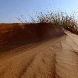 Die sonst eigentlich trockene Wüste lebt nach jedem Regenschauer neu auf.