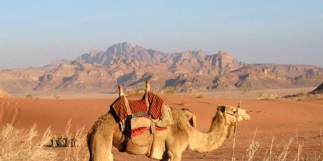 Bereit für den Ausritt im Wadi Rum