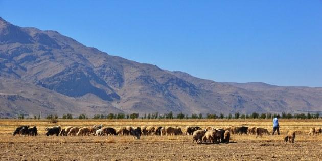 Unterwegs treffen wir Einheimische, wie Hirten mit ihren Herden