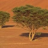 Ab und zu finden Sie auch Bewuchs zwischen den Dünen