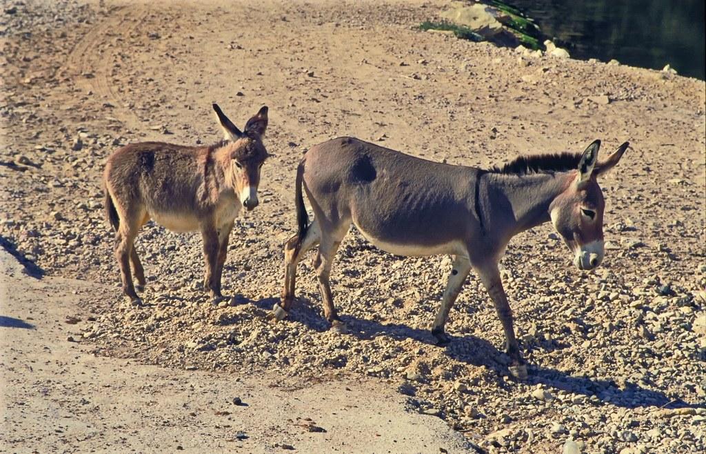 Diese beeindruckenden Tiere werden Sie während der Wanderung durch die Berge begleiten