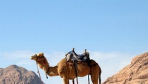 Reitkamel Wadi Rum