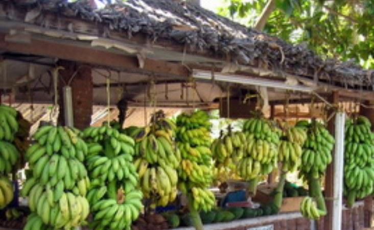 Entlang der Straßen können Sie frisches Obst direkt vom Bauern kaufen, der sie auf den Feldern dahinter anbaut.