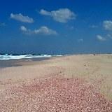 Die Strände der Ostküste sind durch kleine Muscheln rose gefärbt.