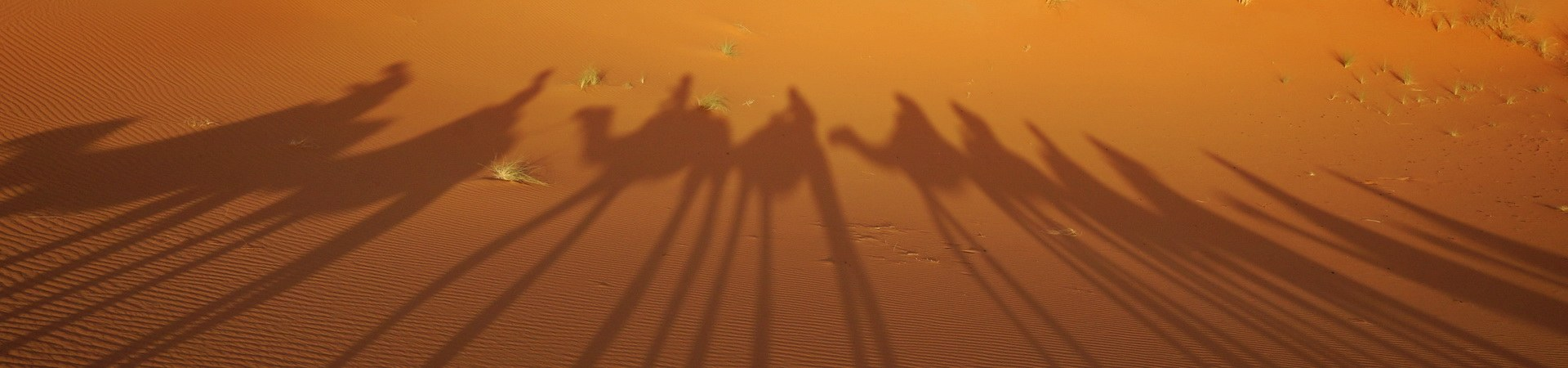 Kamelschatten in der omanischen Wüste.