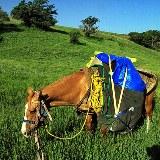 Für den Transport unseres Gepäcks setzen wir auf echte Pferdestärken