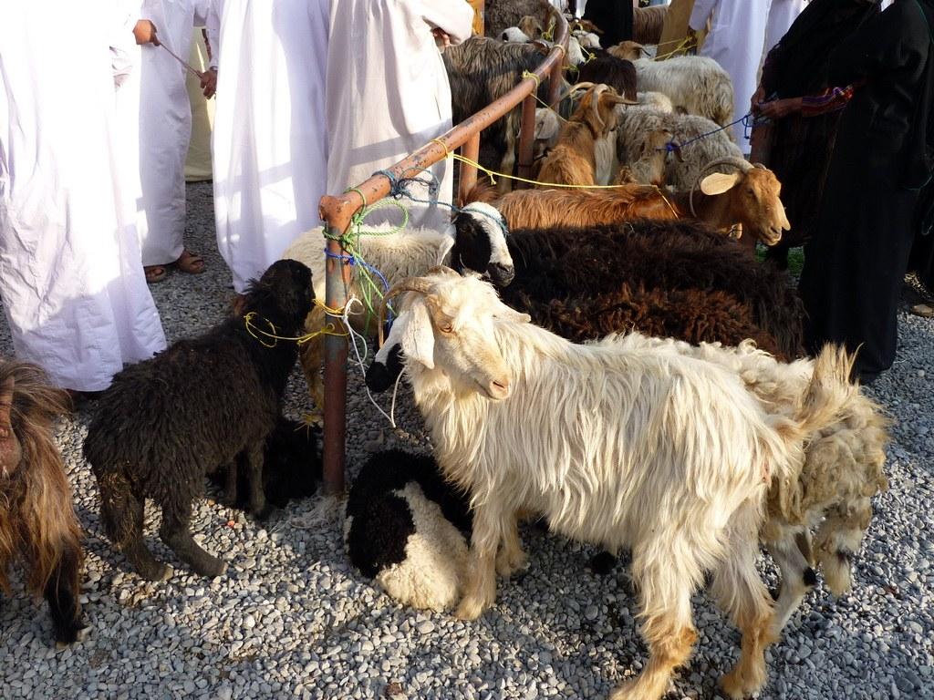 Die Tiere warten auf Ihre Besitzer um Ihre Runde im Verkaufskreis zu drehen.