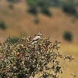 Im Golestan Nationalpark kann man eine Vielzahl an Tierarten beobachten