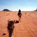 Vom Rücken der Kamele die Weite der Wüste genießen.