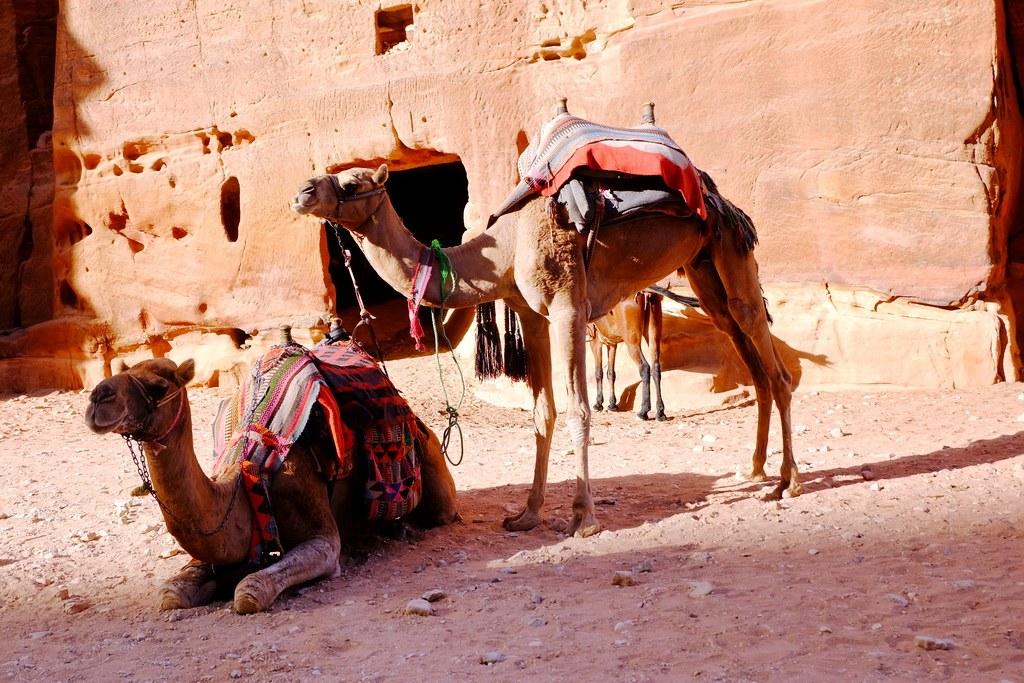 Kamele, Esel oder Pferde bringen Sie in jede Ecke der antiken Stadt