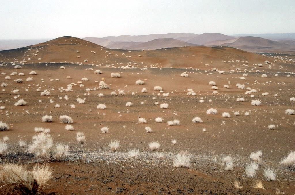 Am Rand der Lut-Wüste wachsen nur einzelne kleine Sträucher