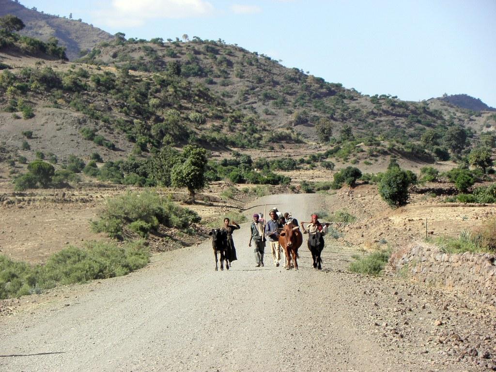 Eine Gruppe Einheimischer mit ihren Tieren