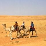 Auf dem Rücken der Kamele geht es durch das Wadi Rum