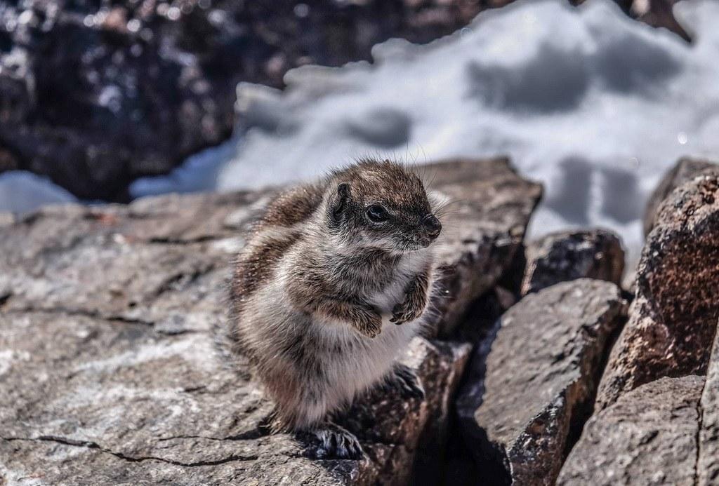 Wenn Sie Gölück haben begegnen Sie diesen kleinen Berghörnchen