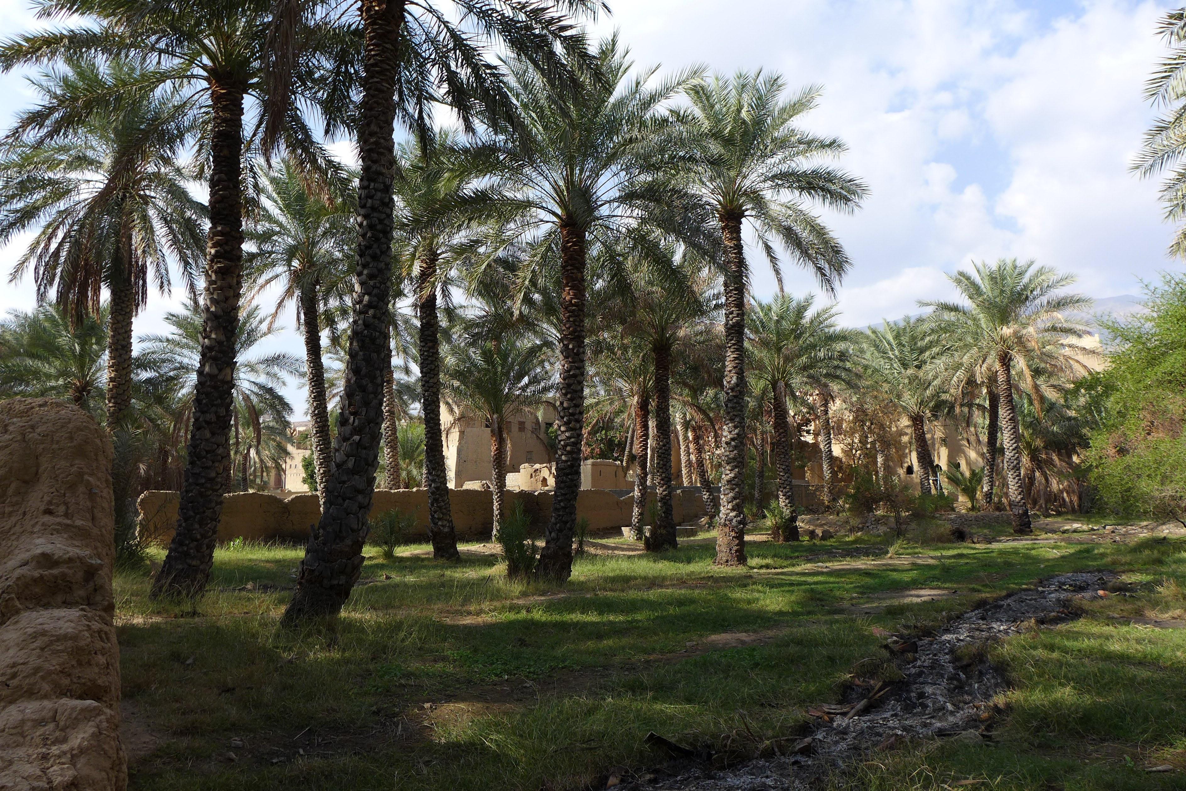 Das Dorf bietet sich für einen Spaziergang an, denn die vielen Palmen bieten Schatten entlang der Gärten.