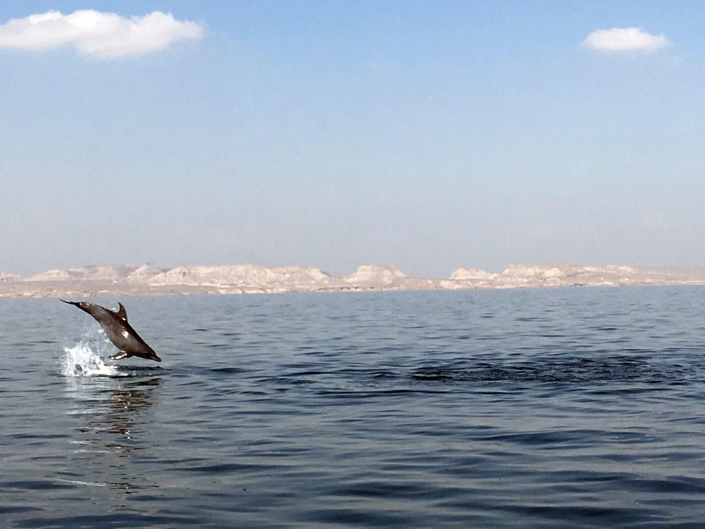 während einer Bootsfahrt sieht man morgens oft ganze Deflinherden anden Küsten