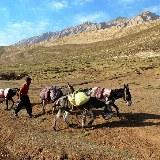 Esel sind fleißige Helfer der Bauern, die auch die Berge erklimmen können