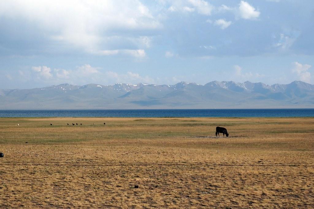Weideland der Nomaden im Sommer