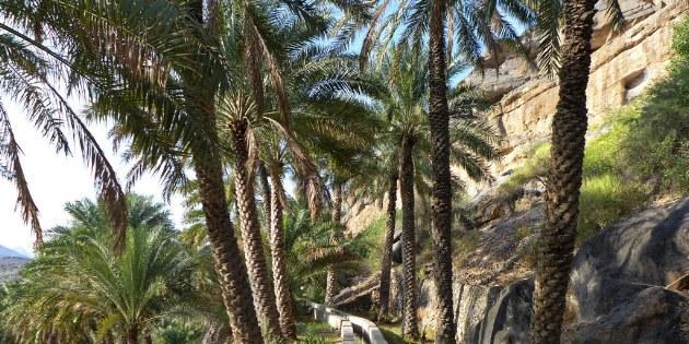 In dem Bergdorf Misfat erlebt man ein ganz ursprüngliches Oman.