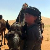 Kameltrekking Oman Rub al-Khali zutrauliche Kamele