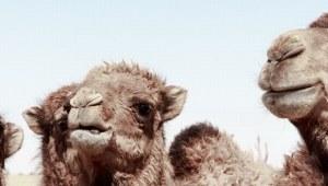 Turkmenistan Reisen: Urlaub & Rundreisen Karakum